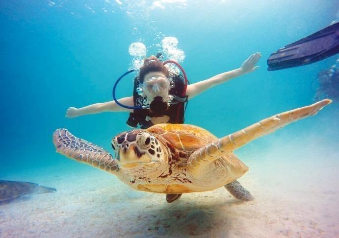 Swim with Jojo, the resident turtle of The Taaras